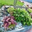 Zakładanie ogrodów, pielęgnacja zieleni,