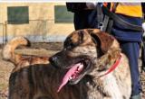 Na Paluchu - Schronisko dla Bezdomnych Zwierząt