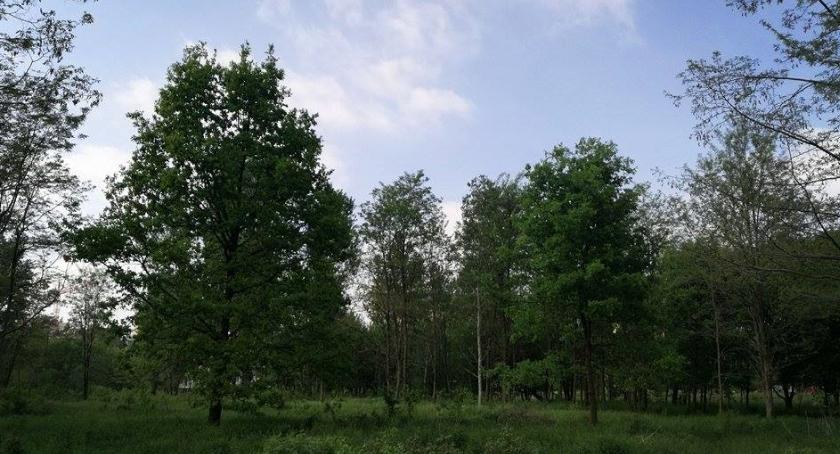Inwestycje, Rondo osiedle miejscu urokliwego zielonego zakątka Żeraniu - zdjęcie, fotografia