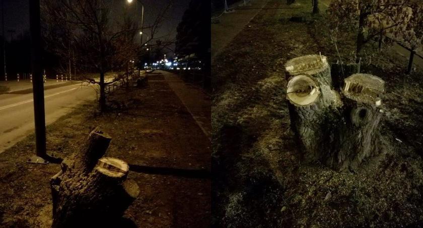 Zieleń, Znów nielegalna wycinka Żeraniu Dzielnica wydała zgody ścięcie drzew Krzyżówki - zdjęcie, fotografia