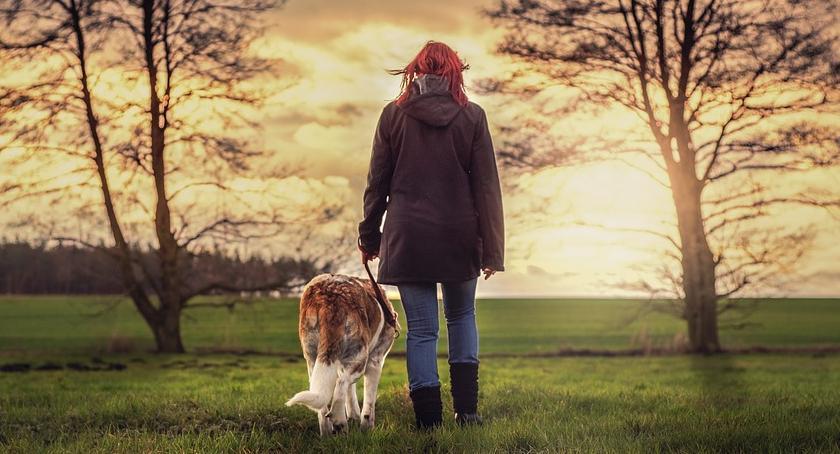 Zwierzęta, spacer smyczy nowego - zdjęcie, fotografia