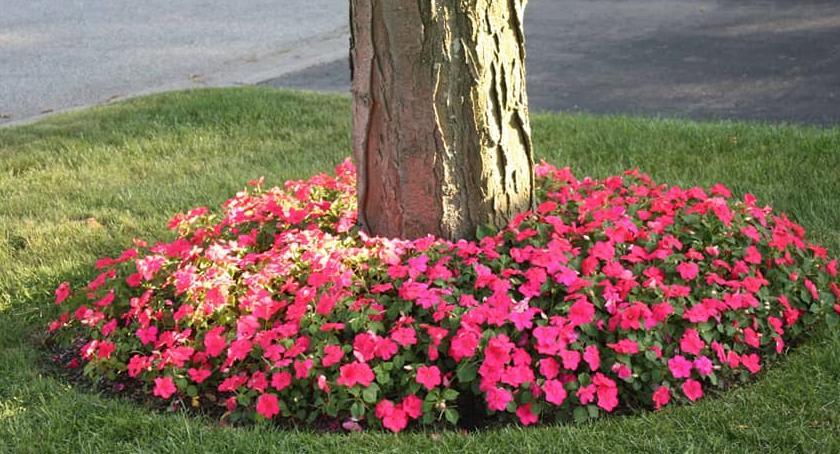 Zieleń, Ukwiecamy Białołękę akcja sadzenia kwiatów dzisiaj! - zdjęcie, fotografia
