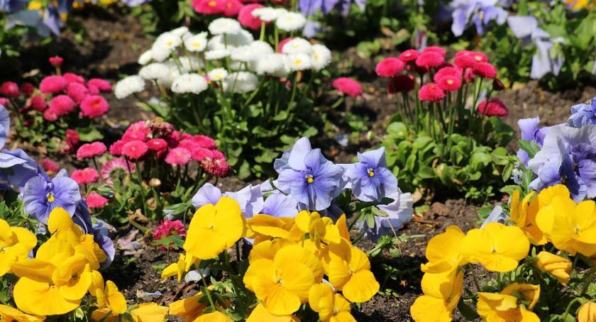 Budżet partycypacyjny, końcu piękne trawniki Zielonej Białołęce - zdjęcie, fotografia