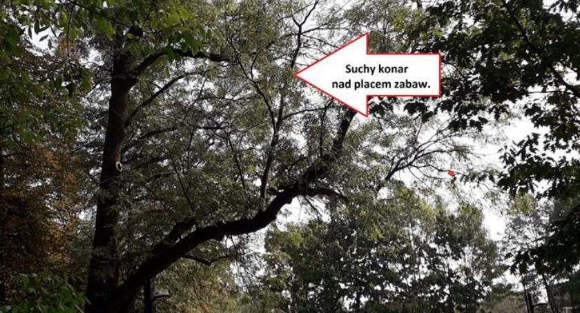 Bezpieczeństwo, Tragedia Parku Praskim pytania drzew naszej dzielnicy powody - zdjęcie, fotografia