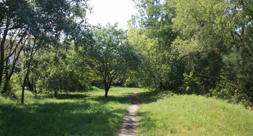 Zieleń, zielony teren Botewa ruszają konsultacje - zdjęcie, fotografia