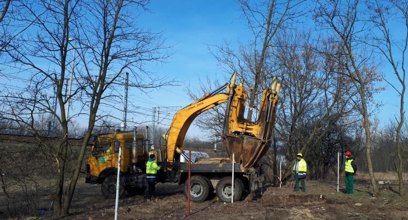 Zieleń, Zamiast wycinać drzewa przesadził miejsca Można - zdjęcie, fotografia