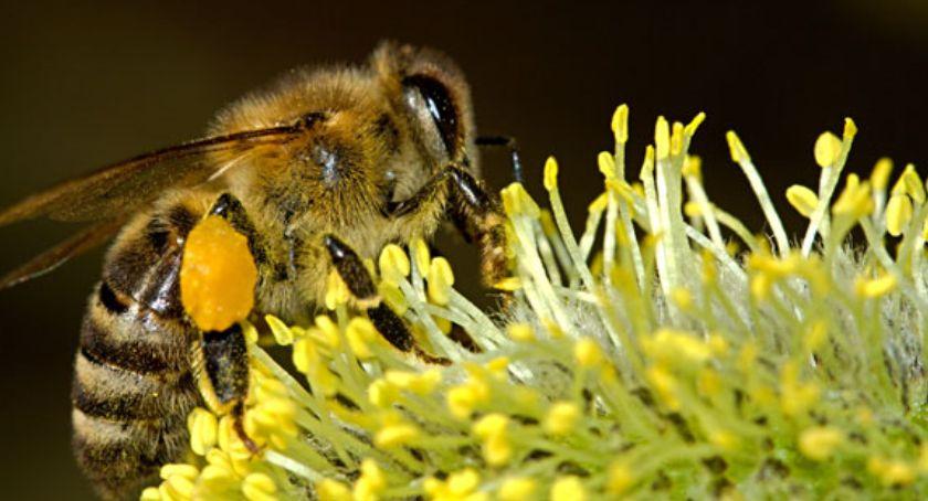 Inwestycje, Pszczoły zamieszkały Białołęce dachu Urzędu Dzielnicy - zdjęcie, fotografia
