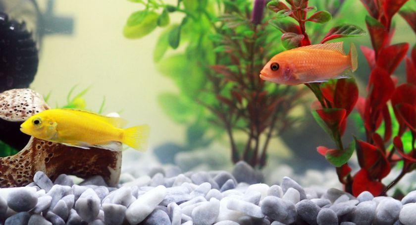 Niezbędne czynności prowadzenia akwarium