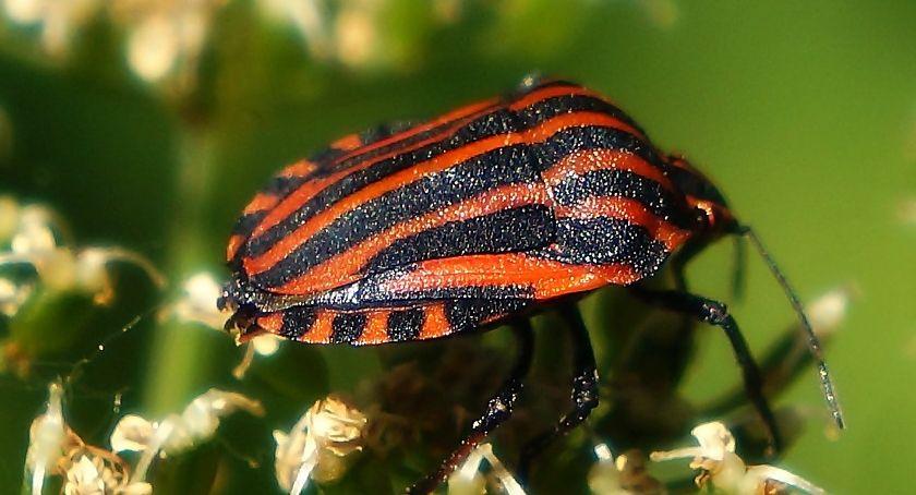 Inwestycje, Protest przeciwko budowie drogi wchodzi zagrożony gatunek chrząszcza - zdjęcie, fotografia