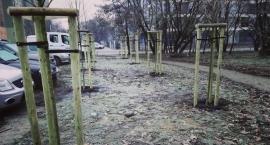 Jest decycja Ministerstwa - Będzie odpowiednia rekompensata za wycięcie drzew nad Kanałem Żerańskim