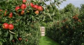 Sad, w nim jabłonie - przy ul. Jabłoni. Takiego miejsca jeszcze na Białołęce nie ma!