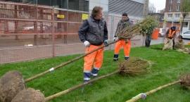Ponad 300 drzew dla Białołęki!