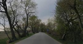 Gazociąg przy Chudoby - co z drzewami w okolicy?