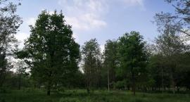 Rondo i osiedle w miejscu urokliwego, zielonego zakątka na Żeraniu