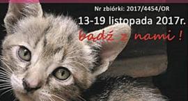 Zbiórka dla bezdomnych zwierząt już od 13 listopada! Pomagamy przetrwać zimę!