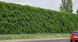 ZielonaTrasa Mostu Północnego - rośliny na ekranach akustycznych jeszcze w tym roku