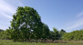 Park odpoczynku - jego historia
