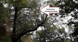 Tragedia w Parku Praskim i pytania o stan drzew w naszej dzielnicy. Czy mamy powody do obaw?