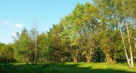 Mieszkańcy Białołęki walczą o zielony skwer przy ul. Mehoffera