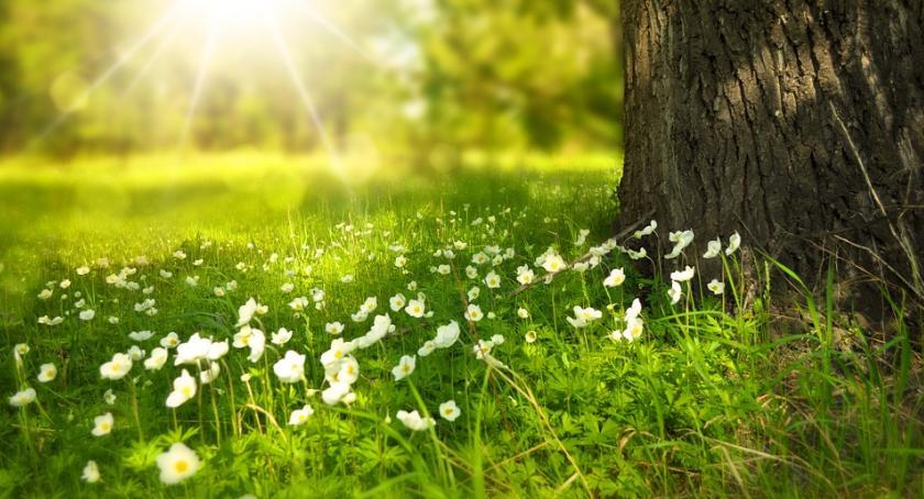 Uprawa, czeka wiosna - zdjęcie, fotografia