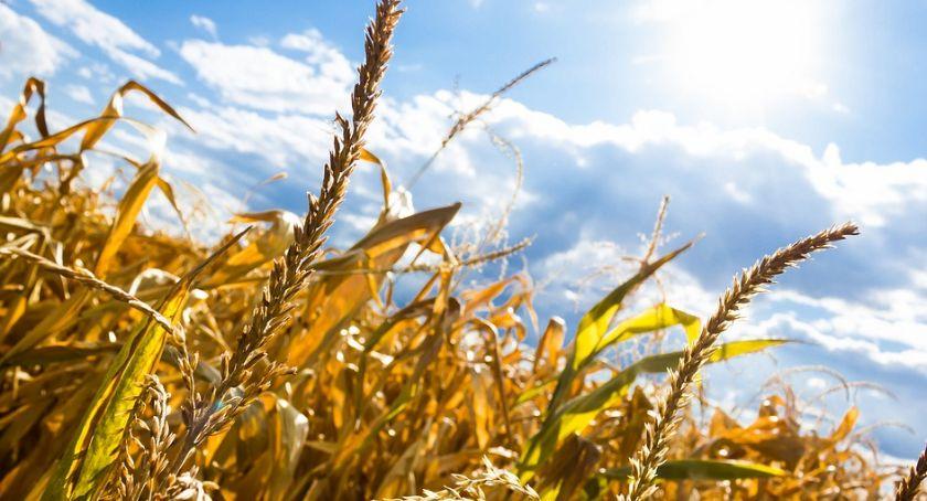 Uprawa, Rolniku ubiegaj pomoc - zdjęcie, fotografia