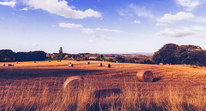 Instytucje rolnicze, Dopłaty bezpośrednie przeliczone - zdjęcie, fotografia