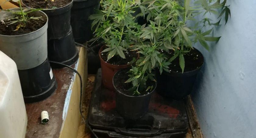 Kronika kryminalna, Hodował wdomu marihuanę - zdjęcie, fotografia