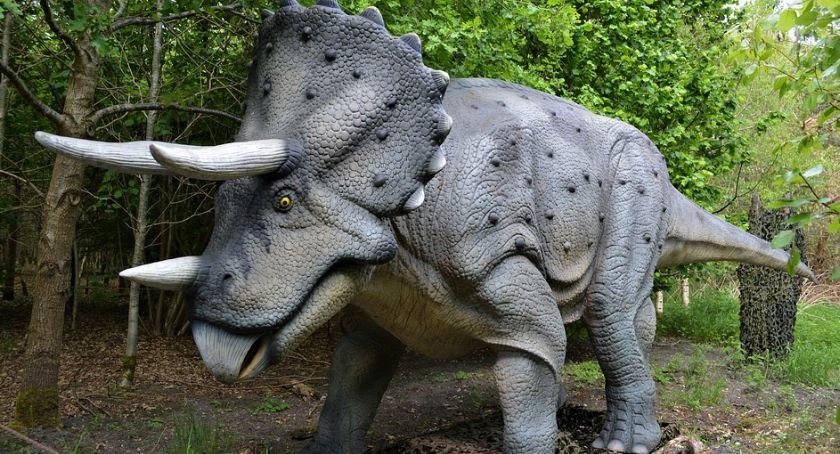 Edukacja, Paleontologia fascynująca - zdjęcie, fotografia