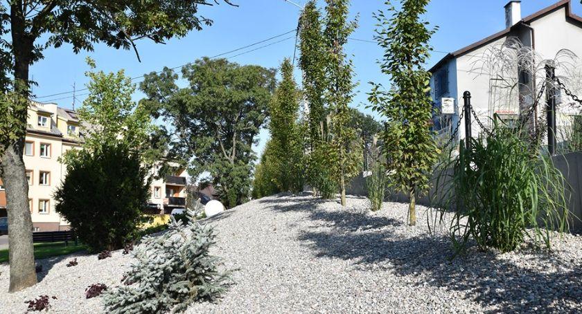 Inwestycje, Coraz więcej zieleni mieście - zdjęcie, fotografia