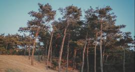 Kiedy można wyciąć drzewo?
