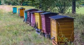 Pomoc dla pszczelarzy
