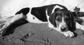 Bezdomne psy problemem dla gminy?