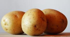 Święto ziemniaków w Przysieku