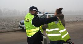 Policjanci przypominają: bądź widoczny!