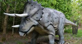 Paleontologia jest fascynująca