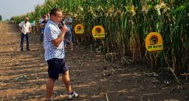 Kukurydza zamiast siana