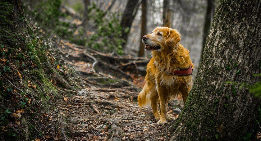 PZŁ, Ocena międzynarodowa pracy psów myśliwskich terminarz - zdjęcie, fotografia
