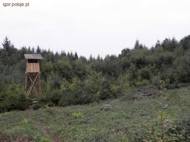 Kłusownictwo, Kłusownicy lesie - zdjęcie, fotografia