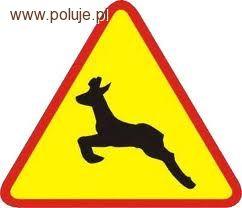 Prawo łowieckie, Kolizja udziałem dzikiej zwierzyny problem myśliwych - zdjęcie, fotografia