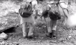 Kłusownicy w Karpatach