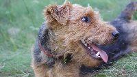 Naturalne zachowania psów - psychika alfy