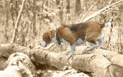 Hubertus Spalski 2016 – będziemy polować i biesiadować