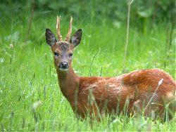 Zarządzanie populacjami zwierząt: zapraszamy na konferencję
