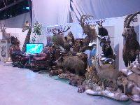 Targi Expo Hunting - niedziela