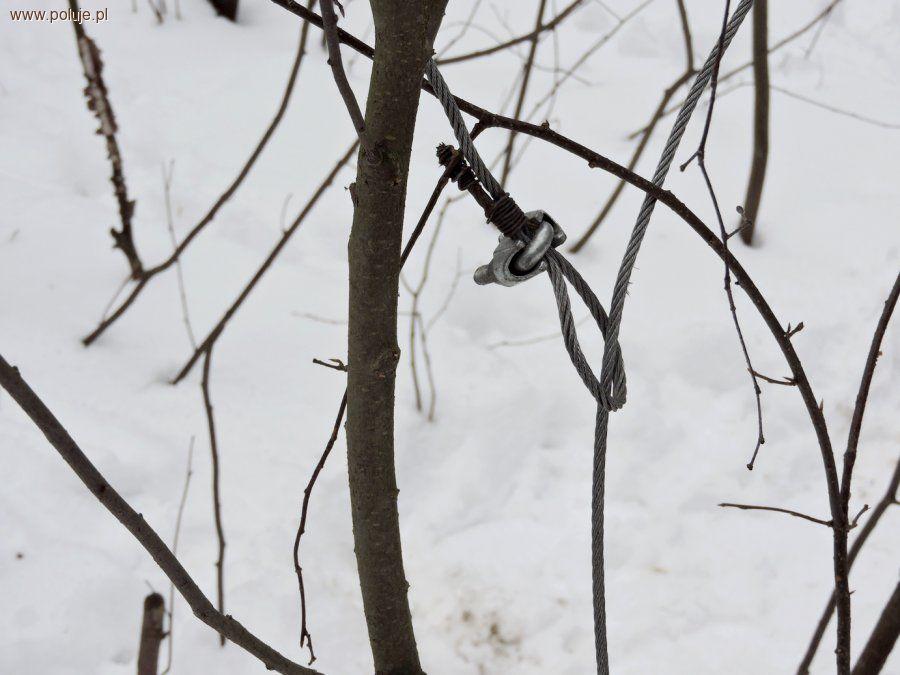 Kłusownictwo, Metodyczny kłusownik zdradziły ślady śniegu - zdjęcie, fotografia