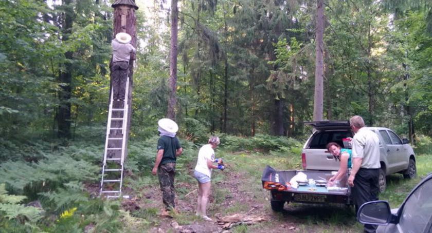 Wiadomości, Pszczoły wracają lasów dzięki leśnikom - zdjęcie, fotografia