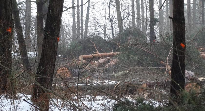 Styl Życia, latach wycinek tysięcy drzew radna apeluje nasadzenia - zdjęcie, fotografia