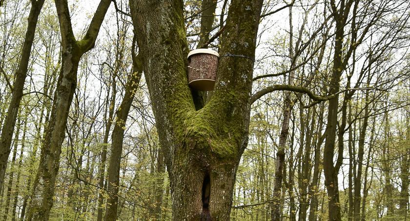 Styl Życia, Wieszanie budek lęgowych bardzo pomaga ptakom - zdjęcie, fotografia