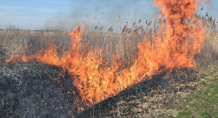 Styl Życia, wolno wypalać traw! - zdjęcie, fotografia