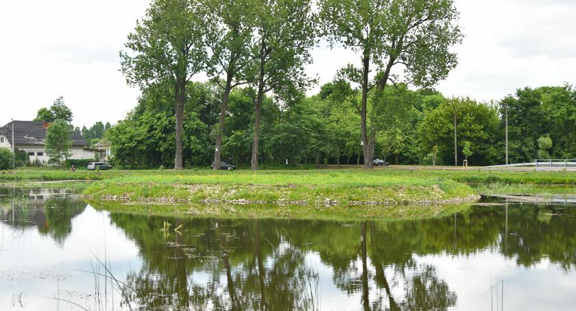 Styl Życia, Stawy Marczukowskie wracają dawnej świetności pojawią łąki kwietne setki drzew - zdjęcie, fotografia